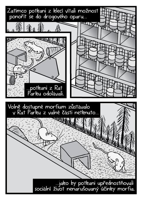 Komiks nadhled Rat Park potkani a stojan s klecemi. Zatímco potkani z klecí vítali možnost ponořit se do drogového oparu… …potkani z Rat Parku odolávali. Volně dostupné morfium zůstávalo v Rat Parku z valné části netknuto… …jako by potkani upřednostňovali sociální život nenarušovaný účinky morfia.
