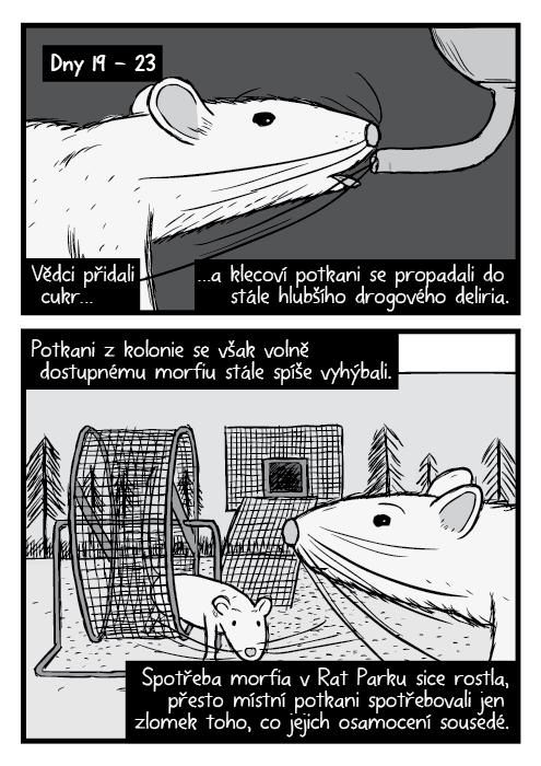 Černobílá detailní kresba potkan.Rat Park kolo na běhání komiks. Vědci přidali cukr… …a klecoví potkani se propadali do stále hlubšího drogového deliria. Potkani z kolonie se však volně dostupnému morfiu stále spíše vyhýbali. Spotřeba morfia v Rat Parku sice rostla, přesto místní potkani spotřebovali jen zlomek toho, co jejich osamocení sousedé.