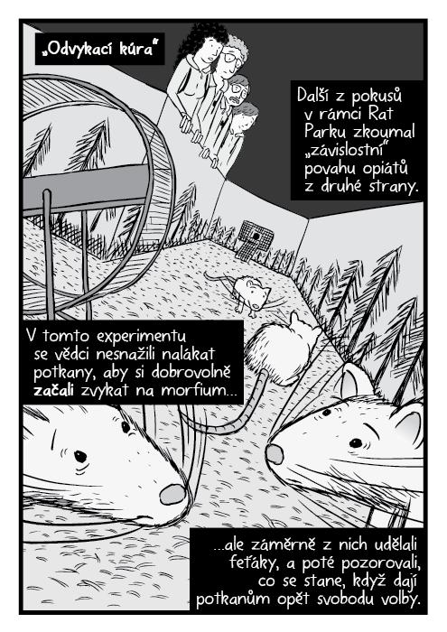 """Komiks detailní pohled na zdrogované potkany. """"Odvykací kúra"""". Další z pokusů v rámci Rat Parku zkoumal """"závislostní"""" povahu opiátů z druhé strany. V tomto experimentu se vědci nesnažili nalákat potkany, aby si dobrovolně začali zvykat na morfium… …ale záměrně z nich udělali feťáky, a poté pozorovali, co se stane, když dají potkanům opět svobodu volby."""