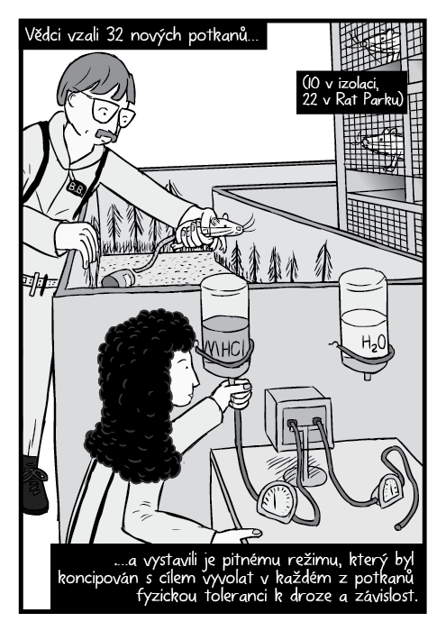 Komiks vědci upravují vybavení experimentu Rat Park. Vědci vzali 32 nových potkanů… (10 vizolaci, 22 vRat Parku) …a vystavili je pitnému režimu, který byl koncipován scílem vyvolat vkaždém zpotkanů fyzickou toleranci kdroze a závislost.