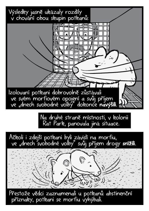 """Černobílý komiks potkan vkleci, vědec dívající se do klece. Výsledky jasně ukázaly rozdíly v chování obou skupin potkanů: Izolovaní potkani dobrovolně zůstávali ve svém morfiovém opojení a svůj příjem ve """"dnech svobodné volby"""" dokonce navýšili. Na druhé straně místnosti, vkolonii Rat Park, panovala jiná situace. Ačkoli i zdejší potkani byli závislí na morfiu, ve """"dnech svobodné volby"""" svůj příjem drogy snížili. Přestože vědci zaznamenali u potkanů abstinenční příznaky, potkani se morfiu vyhýbali."""