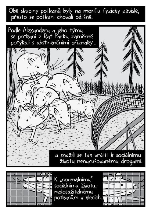 """Komiks škubající se rodina potkanů drogový experiment Rat Park. Obě skupiny potkanů byly na morfiu fyzicky závislé, přesto se potkani chovali odlišně. Podle Alexandera a jeho týmu se potkani zRat Parku záměrně potýkali sabstinenčními příznaky… …a snažili se tak vrátit ksociálnímu životu nenarušovanému drogami. K """"normálnímu"""" sociálnímu životu, který pro izolované potkany nebyl dosažitelný."""