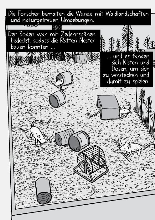 Vogelperspektive auf das Rattengehege mit Ratten, Dosen und Laufrädern. Die Forscher bemalten die Wände mit Waldlandschaften und naturgetreuen Umgebungen. Der Boden war mit Zedernspänen bedeckt, sodass die Ratten Nester bauen konnten … und es fanden sich Kisten und Dosen, um sich zu verstecken und damit zu spielen.
