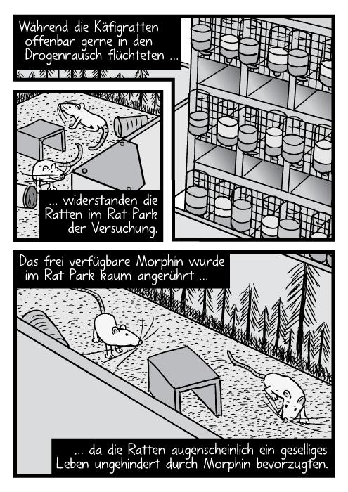 Vogelperspektive auf die Ratten im Rat Park und in den Käfigen. Während die Käfigratten offenbar gerne in den Drogenrausch flüchteten … widerstanden die Ratten im Rat Park der Versuchung. Das frei verfügbare Morphin wurde im Rat Park kaum angerührt …da die Ratten augenscheinlich ein geselliges Leben ungehindert durch Morphin bevorzugten.