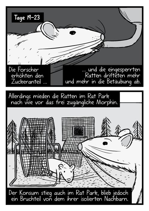 Detailzeichnung von Ratten in schwarz und weiß. Ein Laufrad im Rad Park. Die Forscher erhöhten den Zuckeranteil… und die eingesperrten Ratten drifteten mehr und mehr in die Betäubung ab. Allerdings mieden die Ratten im Rat Park nach wie vor das frei zugängliche Morphin. Der Konsum stieg auch im Rat Park, blieb jedoch ein Bruchteil von dem ihrer isolierten Nachbarn.