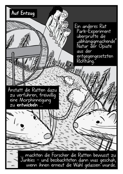 """Nahaufnahme einer Ratte unter Drogeneinfluss. Ein anderes Rat Park-Experiment überprüfte die """"abhängigmachende"""" Natur der Opiate aus der entgegengesetzten Richtung. Anstatt die Ratten dazu zu verführen freiwillig eine Morphinneigung zu entwickeln … machten die Forscher die Ratten bewusst zu Junkies - und beobachteten dann was geschah, wenn ihnen erneut die Wahl gelassen wurde."""