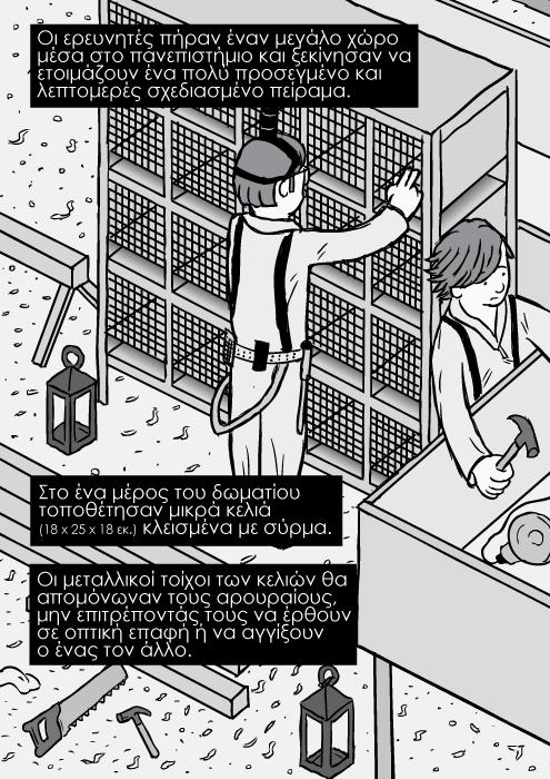 Ισομετρική οπτική καρτούν κόμικ με κελιά αρουραίων. Οι ερευνητές πήραν έναν μεγάλο χώρο μέσα στο πανεπιστήμιο και ξεκίνησαν να ετοιμάζουν ένα πολύ προσεγμένο και λεπτομερές σχεδιασμένο πείραμα. Στο ένα μέρος του δωματίου τοποθέτησαν μικρά κελιά (18 x 25 x 18 εκ.) κλεισμένα με σύρμα. Οι μεταλλικοί τοίχοι των κελιών θα απομόνωναν τους αρουραίους, μην επιτρέποντάς τους να έρθουν σε οπτική επαφή ή να αγγίξουν ο ένας τον άλλο.