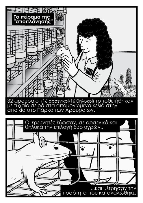 Γυναίκα επιστήμονας κρατά εργαστηριακό αρουραίο κόμικ. Κόμικ καρτούν με αρουραίο που τον κοιτά ερευνητής. To πείραμα της