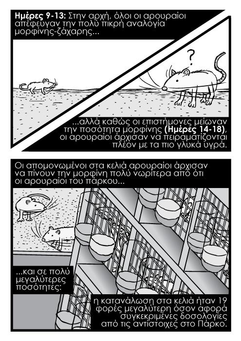 Σχάρες εργαστηριακών κλουβιών πειραμάτων από ψηλά, καρτούν κόμικ αρουραίος κλουβί το Πάρκο των Αρουραίων. Ημέρες 9-13: Στην αρχή, όλοι οι αρουραίοι απέφευγαν την πολύ πικρή αναλογία μορφίνης-ζάχαρηςαλλά καθώς οι επιστήμονες μείωναν την ποσότητα μορφίνης (Ημέρες 14-18), οι αρουραίοι άρχισαν να πειραματίζονται πλέον με τα πιο γλυκά υγρά. Οι απομονωμένοι στα κελιά αρουραίοι άρχισαν να πίνουν την μορφίνη πολύ νωρίτερα από ότι οι αρουραίοι του πάρκου...και σε πολύ μεγαλύτερες ποσότητες: η κατανάλωση στα κελιά ήταν 19 φορές μεγαλύτερη όσον αφορά συγκεκριμένες δοσολογίες από τις αντίστοιχες στο Πάρκο.