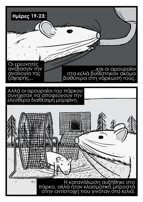 Ζωγραφιά κόμικ αρουραίοι από κοντά ποντίκια κοντινό πλάνο, τροχός κίνησης ποντικιών αρουραίων κόμικ. Οι ερευνητές ανέβασαν την αναλογία της ζάχαρης και οι αρουραίοι στα κελιά βυθίστηκαν ακόμα βαθύτερα στη νάρκωσή τους. Αλλά οι αρουραίοι του πάρκου συνέχισαν να αποφεύγουν την ελεύθερα διαθέσιμη μορφίνη. Η κατανάλωση αυξήθηκε στο πάρκο, αλλά ήταν κλασματική μπροστά στην αντίστοιχη που γινόταν στα κελιά.