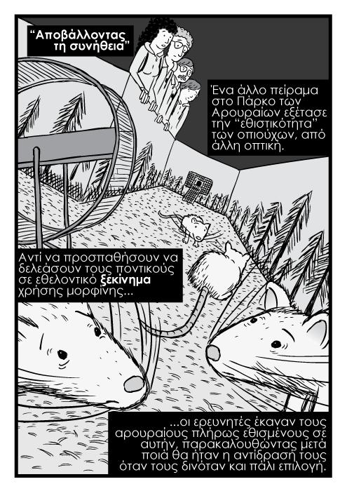 """Aποβάλλοντας τη συνήθεια"". Ένα άλλο πείραμα στο Πάρκο των Αρουραίων εξέτασε την ""εθιστικότητα"" των οπιούχων, από άλλη οπτική. Αντί να προσπαθήσουν να δελεάσουν τους ποντικούς σε εθελοντικό ξεκίνημα χρήσης μορφίνης ...οι ερευνητές έκαναν τους αρουραίους πλήρως εθισμένους σε αυτήν, παρακαλουθώντας μετά ποιά θα ήταν η αντίδρασή τους όταν τους δινόταν και πάλι επιλογή."