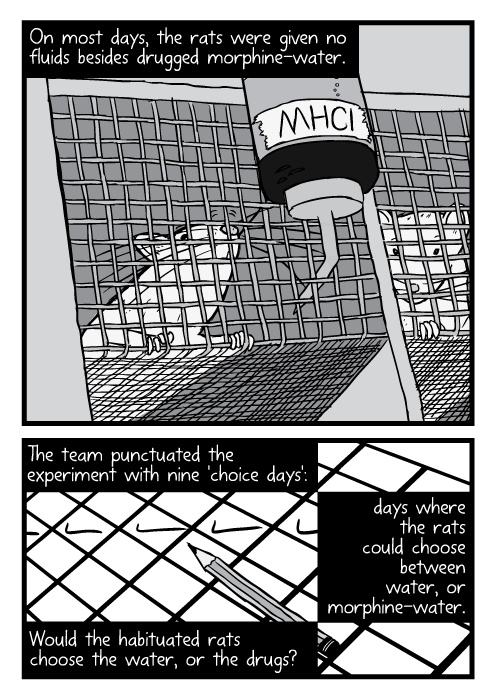 Low angle cartoon rats inside wire mesh cages. On most days, the rats were given no fluids besides drugged morphine-water. The team punctuated the experiment with nine 'choice days': days where the rats could choose between water, or morphine-water. Would the habituated rats choose the water, or the drugs?