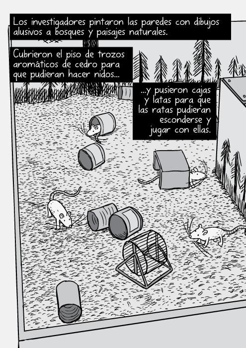 Dibujo, en el ángulo superior, de un cercado de ratas. Caricatura de ratas, latas y ruedas. Los investigadores pintaron las paredes con dibujos alusivos a bosques y paisajes naturales. Cubrieron el piso de trozos aromáticos de cedro para que pudieran hacer nidos...y pusieron cajas y latas para que las ratas pudieran esconderse y jugar con ellas.