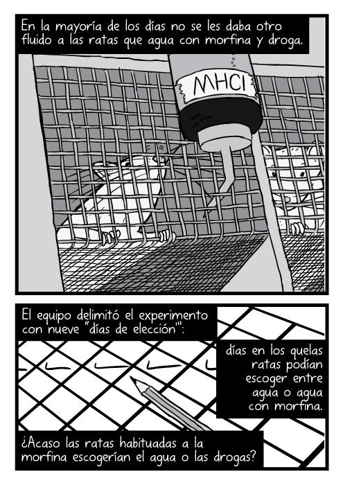 """Caricatura, en el ángulo inferior, de ratas dentro de jaulas con mallas metálicas. En la mayoría de los días no se les daba otro fluido a las ratas que agua con morfina y droga. El equipo delimitó el experimento con nueve """"días de elección'"""": días en los que las ratas podían escoger entre agua o agua con morfina. ¿Acaso las ratas habituadas a la morfina escogerían el agua o las drogas?"""