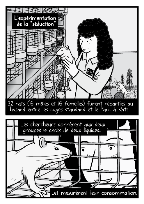 """Dessin d'une femme chercheuse tenant un rat. Un rat dans une cage des observé par un chercheur. L'expérimentation de la """"séduction"""" 32 rats (16 mâles et 16 femelles) furent réparties au hasard entre les cages standard et le Parc à Rats. Les chercheurs donnèrent aux deux groupes le choix de deux liquides Et mesurèrent leur consommation."""
