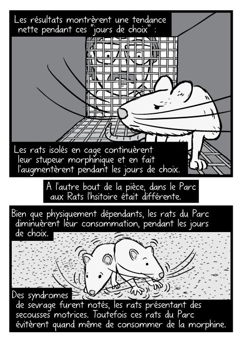 """Un dessin de rat en noir et blanc,dans une cage, observé par un chercheur. Les résultats montrèrent une tendance nette pendant ces """"jours de choix"""" : Les rats isolés en cage continuèrent leur stupeur morphinique et en fait l'augmentèrent pendant les jours de choix. A l'autre bout de la pièce, dans le Parc aux Rats l'hsitoire était différente. Bien que physiquement dépendants, les rats du Parc diminuèrent leur consommation, pendant les jours de choix. Des syndromes de sevrage furent notés, les rats présentant des secousses motrices. Toutefois ces rats du Parc évitèrent quand même de consommer de la morphine."""
