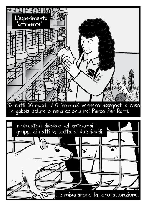 Disegno di ricercatrice che tiene un ratto da laboratorio. Disegno di ratto dentro una gabbia, ricercatore che guarda dentro. 32 ratti (16 maschi / 16 femmine) vennero assegnati a caso in gabbie isolate o nella colonia nel Parco Per Ratti. I ricercatori diedero ad entrambi i gruppi di ratti la scelta di due liquidi e misurarono la loro assunzione.