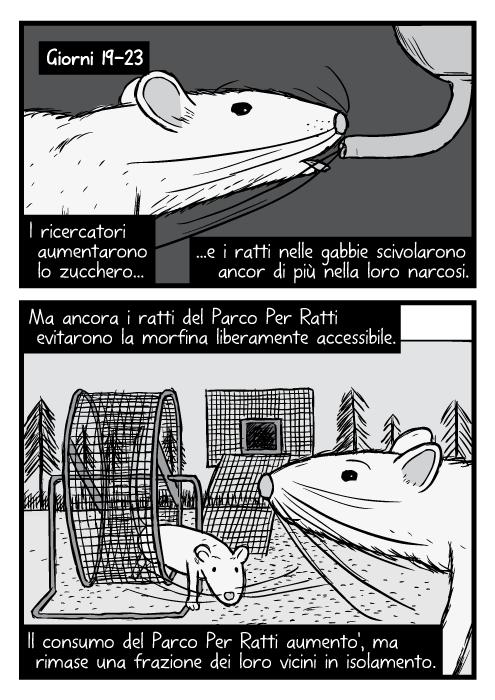 Disegni in bianco e nero ravvicinati di ratto. Ruota per correre del Parco Dei Ratti. Giorni 19-23. I ricercatori aumentarono lo zucchero e i ratti nelle gabbie scivolarono ancor di più nella loro narcosi. Ma ancora i ratti del Parco Dei Ratti evitarono la morfina liberamente accessibile. Il consumo del Parco Dei Ratti aumento', ma rimase una frazione dei loro vicini in isolamento.