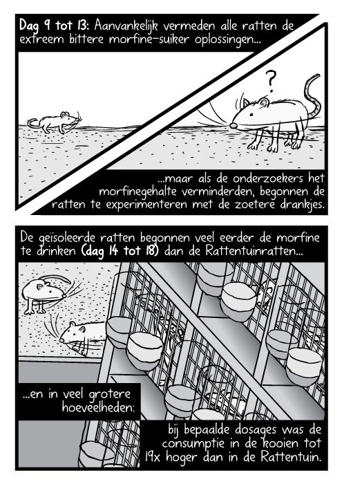 Laboratorium ratten rek vogelperspectief tekening. Cartoon Rattentuin rat kooien. Dag 9 tot 13: Aanvankelijk vermeden alle ratten de extreem bittere morfine-suiker oplossingen maar als de onderzoekers het morfinegehalte verminderden, begonnen de ratten te experimenteren met de zoetere drankjes. De geïsoleerde ratten begonnen veel eerder de morfine te drinken (dag 14 tot 18) dan de Rattentuinratten en in veel grotere hoeveelheden: bij bepaalde dosages was de consumptie in de kooien tot 19x hoger dan in de Rattentuin.