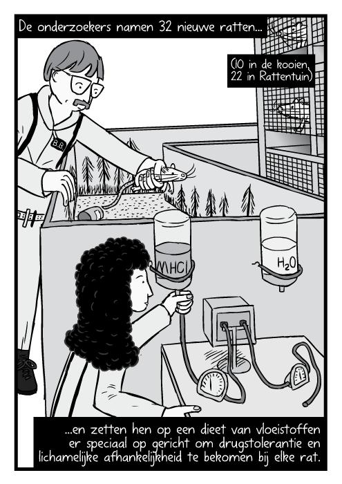 Strip onderzoekers passen Rattentuin experiment uitrusting aan. De onderzoekers namen 32 nieuwe ratten...(10 in de kooien, 22 in Rattentuin)...en zetten hen op een dieet van vloeistoffen er speciaal op gericht om drugstolerantie en lichamelijke afhankelijkheid te bekomen bij elke rat.