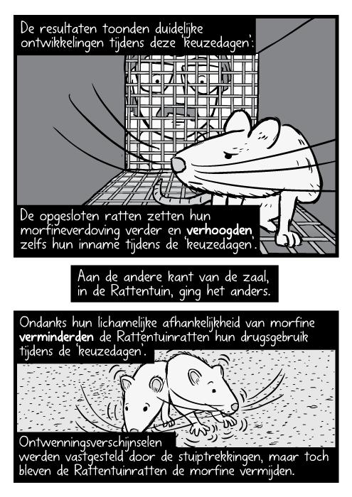Zwart wit strip rat in kooi, onderzoeker kijkt naar binnen. De resultaten toonden duidelijke ontwikkelingen tijdens deze 'keuzedagen': De opgesloten ratten zetten hun morfineverdoving verder en verhoogden zelfs hun inname tijdens de 'keuzedagen'. Aan de andere kant van de zaal, in de Rattentuin, ging het anders. Ondanks hun lichamelijke afhankelijkheid van morfine verminderden de Rattentuinratten hun drugsgebruik tijdens de 'keuzedagen'. Ontwenningsverschijnselen werden vastgesteld door de stuiptrekkingen, maar toch bleven de Rattentuinratten de morfine vermijden.