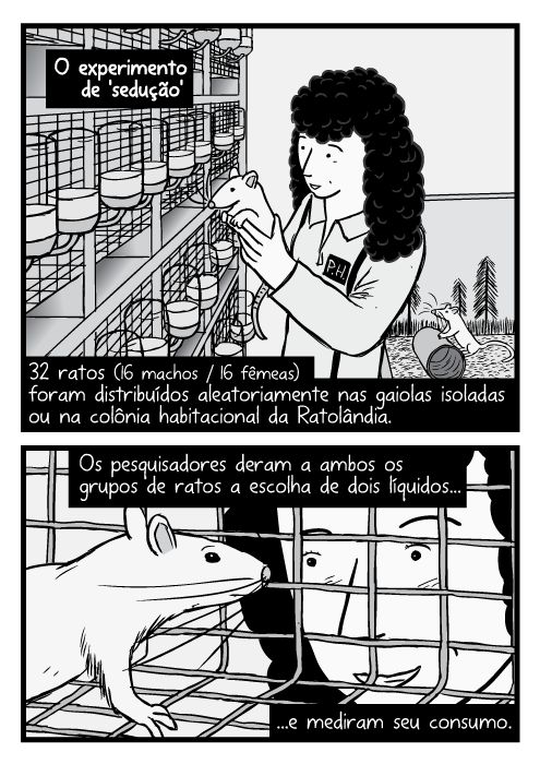 Desenho cientista feminina segurando rato de laboratório. Cartum rato dentro gaiola, pesquisador olhando dentro. O experimento de 'sedução'. 32 ratos (16 machos / 16 fêmeas) foram distribuídos aleatoriamente nas gaiolas isoladas ou na colônia habitacional da Ratolândia. Os pesquisadores deram a ambos os grupos de ratos a escolha de dois líquidos...e mediram seu consumo.