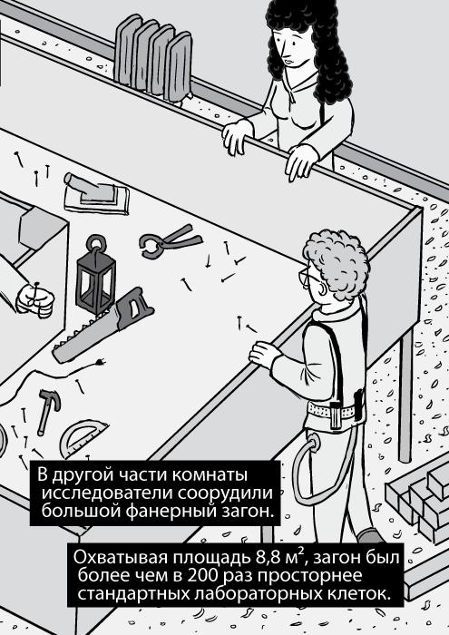 На комиксе показан изометрический вид на столярную мастерскую. Изображение деревянной коробки. В другой части комнаты исследователи соорудили большой фанерный загон. Охватывая площадь 8,8 м², загон был более чем в 200 раз просторнее стандартных лабораторных клеток.