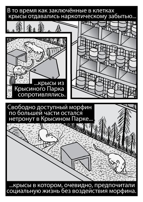 Карикатура с высокого ракурса крыс из Крысиного Парка и стоек с клетками. В то время как заключённые в клетках крысы отдавались наркотическому забытью крысы из Крысиного Парка сопротивлялись. Свободно доступный морфин по большей части остался нетронут в Крысином Парке крысы в котором, очевидно, предпочитали социальную жизнь без воздействия морфина.