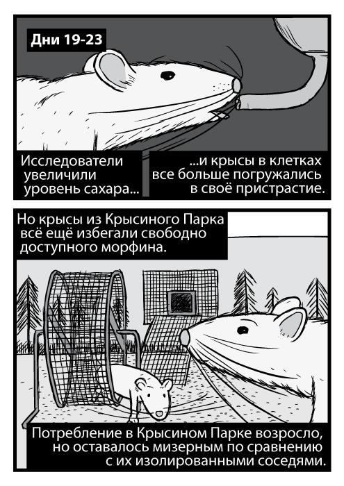 Чёрно-белое изображение крысы крупным ракурсом. Карикатурное изображение колеса для бега в Крысином Парке. Дни 19-23. Исследователи увеличили уровень сахара и крысы в клетках все больше погружались в своё пристрастие. Но крысы из Крысиного Парка всё ещё избегали свободно доступного морфина. Потребление в Крысином Парке возросло, но оставалось мизерным по сравнению с их изолированными соседями.