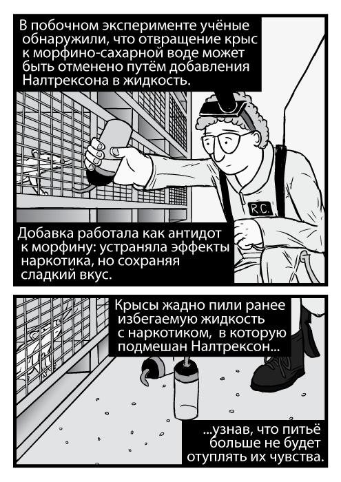 Карикатура изображает исследователя Роберт Комбса, который держит бутылку с морфином у крысиных клеток. В побочном эксперименте учёные обнаружили, что отвращение крыс к морфино-сахарной воде может быть отменено путём добавления Налтрексона в жидкость. Добавка работала как антидот к морфину: устраняла эффекты наркотика, но сохраняя сладкий вкус. Крысы жадно пили ранее избегаемую жидкость с наркотиком, в которую подмешан Налтрексон узнав, что питьё больше не будет отуплять их чувства.
