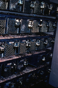 Racks of wire mesh rat cages used in the Rat Park addiction experiments.