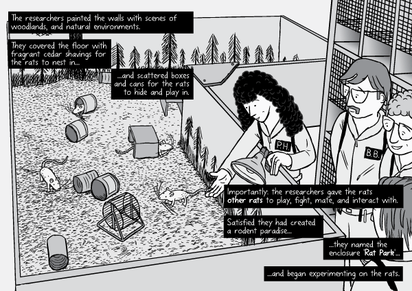 Rat Park comic page: researchers release the rats into the enclosure