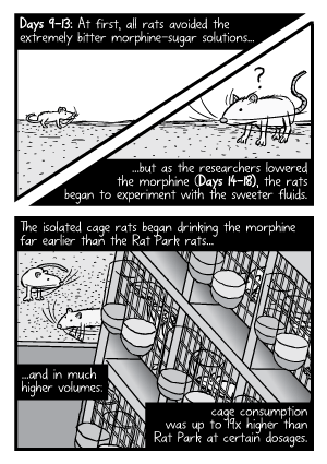 Rat Park experiment comic: The isolated cage rats began drinking the morphine far earlier than the Rat Park rats.