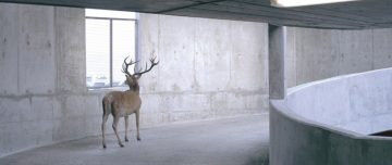 Photography of deer in parking garage ramp - cropped photo from George Monbiot's Feral cover