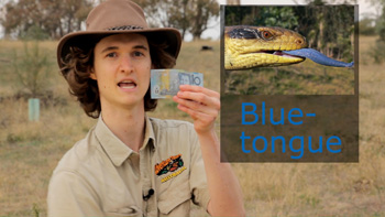 Holding an Australian $10 note - a Blue-tongue. Aussie nickname for Australian currency money because of the blue colour.