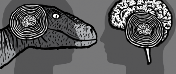 Grey cartoon image of velociraptor head, showing cross-section of 'reptile brain'. Compared with human brain size.