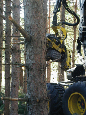 Tree harvester machine cutting down a tree with mechanical saw.
