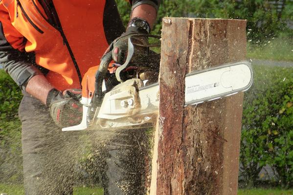 Chainsaw cutting through tree stump. Sawdust flying through air.