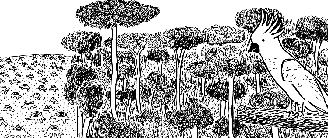 Cartoon view of logged forest next to intact forest, with cockatoo bird watching