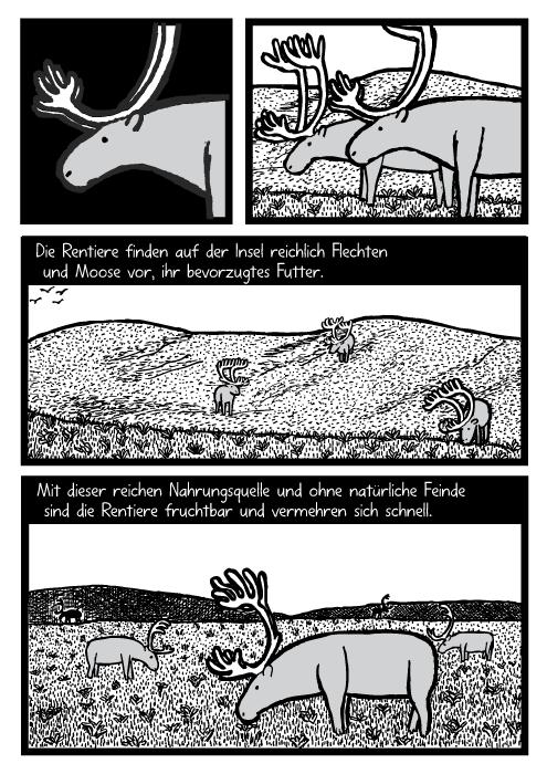 Rentiere grasen Cartoon. Gras Hügel Felder Zeichnung. Die Rentiere finden auf der Insel reichlich Flechten und Moose vor, ihr bevorzugtes Futter. Mit dieser reichen Nahrungsquelle und ohne natürliche Feinde sind die Rentiere fruchtbar und vermehren sich schnell.