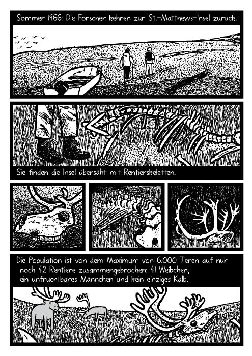 Rentierknochen Cartoon. Tod. Rentiergeweih Zeichnung. Sommer 1966: Die Forscher kehren zur St.-Matthews-Insel zurück. Sie finden die Insel übersäht mit Rentierskeletten. Die Population ist von dem Maximum von 6.000 Tieren auf nur noch 42 Rentiere zusammengebrochen: 41 Weibchen, ein unfruchtbares Männchen und kein einziges Kalb.