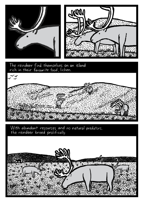 Reindeer grazing cartoon. Grass hills field drawing. The reindeer find themselves on an island rich in their favourite food, lichen. With abundant resources and no natural predators the reindeer breed prolifically.