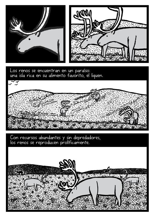 Cómic de renos pastando. Dibujo de pastizal, pradera. Los renos se encuentran en un paraíso: una isla rica en su alimento favorito, el liquen. Con recursos abundantes y sin depredadores, los renos se reproducen prolíficamente.