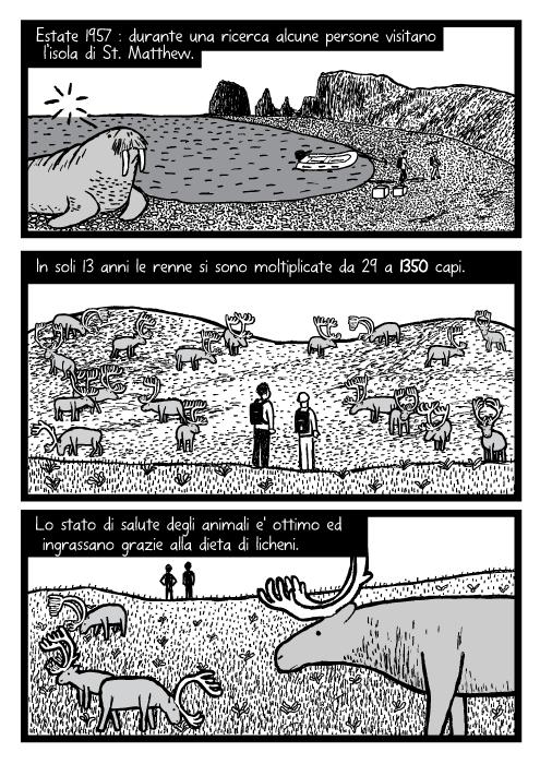 Uomini fanno ricerche sulla mandrie di renne. Disegno di un tricheco. Estate 1957 : durante una ricerca alcune persone visitano l'isola di St. Matthew. In soli 13 anni le renne si sono moltiplicate da 29 a 1350 capi. Lo stato di salute degli animali e' ottimo ed ingrassano grazie alla dieta di licheni.
