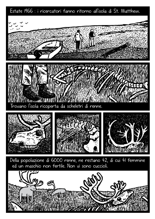 Disegno di ossa di renna. Vignetta di renne morte. Estate 1966 : i ricercatori fanno ritorno all'isola di St. Matthew. Trovano l'isola ricoperta da scheletri di renne. Della popolazione di 6000 renne, ne restano 42, di cui 41 femmine ed un maschio non fertile. Non vi sono cuccioli.
