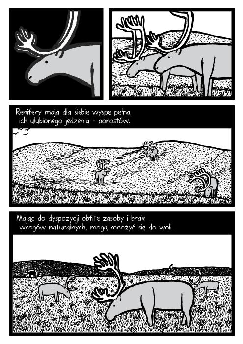 Renifery mają dla siebie wyspę pełną ich ulubionego jedzenia – porostów. Mając do dyspozycji obfite zasoby i brak wrogów naturalnych, mogą mnożyć się do woli.