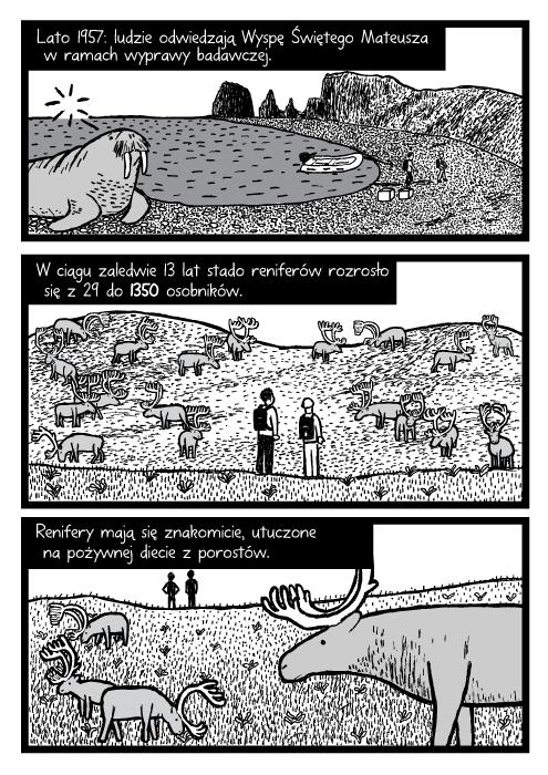 Lato 1957: ludzie odwiedzają Wyspę Świętego Mateusza w ramach wyprawy badawczej. W ciągu zaledwie 13 lat stado reniferów rozrosło się z 29 do 1350 osobników. Renifery mają się znakomicie, utuczone na pożywnej diecie z porostów.