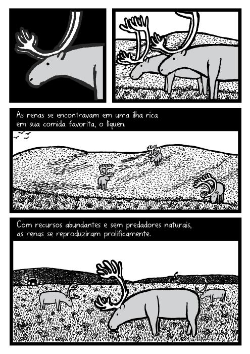 Quadrinhos, cartoon. As renas se encontravam em uma ilha rica em sua comida favorita, o líquen. Com recursos abundantes e sem predadores naturais, as renas se reproduziram prolificamente.