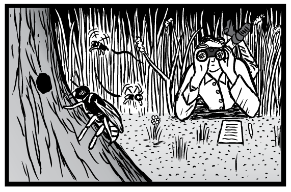 Supernormal Stimuli cartoon of Niko Tinbergen scientist looking into binoculars at insects