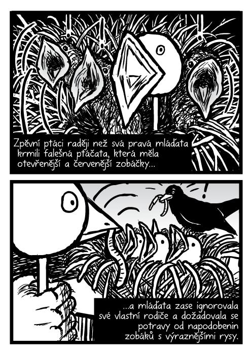 Ptáčata. Pták hnízdo loutka komiks kresba. Zpěvní ptáci raději než svá pravá mláďata krmili falešná ptáčata, která měla otevřenější a červenější zobáčky…a mláďata zase ignorovala své vlastní rodiče a dožadovala se potravy od napodobenin zobáků svýraznějšími rysy.